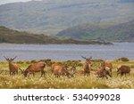 Deer In Highland Wildlife Park...