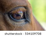 Close Up Of A Horse's Eye.