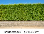 growing green hedge on concrete ... | Shutterstock . vector #534113194