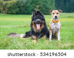 Hundefreunde  Dog Friends