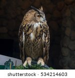 Stock photo the owls are a creatures have a power 534214603