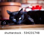 Lazy Black Cat Laying By...