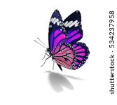 beautiful purple monarch... | Shutterstock . vector #534237958