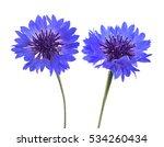 Blue Cornflowers  Cyanus...