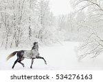 dapple grey arabian horse in... | Shutterstock . vector #534276163