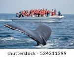 Humpback Whale Tail In Samana ...