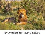 Portrait Of Lion. King Of Masa...