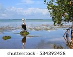 everglades national park  lake... | Shutterstock . vector #534392428