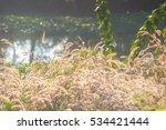 grassland | Shutterstock . vector #534421444