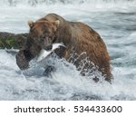 large grizzly bear with a... | Shutterstock . vector #534433600