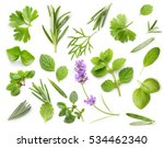 fresh spices and herbs isolated ... | Shutterstock . vector #534462340