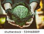 organic vegetables. farmers...   Shutterstock . vector #534468889