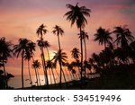 Dark Silhouettes Of Coconut...