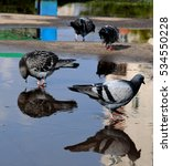 Pigeons With Reflection 2