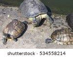 terrapin  pond turtle...   Shutterstock . vector #534558214