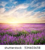 Meadow Of Lavender. Nature...