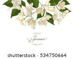 vector elegant jasmine flower... | Shutterstock .eps vector #534750664