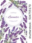vector lavender flower frame on ... | Shutterstock .eps vector #534755170