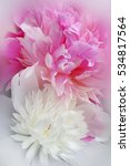 vivid romantic pink and white... | Shutterstock . vector #534817564