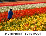 A Worker Picks Flowers Amongst...