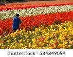 A Worker Picks Flowers Amongst...