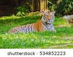indochinese tiger  or corbett's ... | Shutterstock . vector #534852223