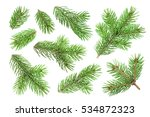 fir tree branch isolated on... | Shutterstock . vector #534872323