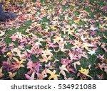 beautiful autumn leaves fall on ... | Shutterstock . vector #534921088