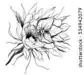 cactus queen of the night... | Shutterstock . vector #534942079