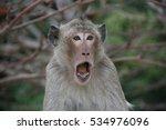 Stock photo crazy monkey 534976096