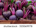 Fresh Harvested Beetroots In...