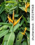yellow strelitzia   bird of... | Shutterstock . vector #535199068