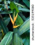 yellow strelitzia   bird of... | Shutterstock . vector #535199080
