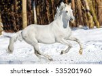 White Horse Galloping On Snow