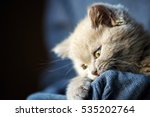 Stock photo cute little kitten 535202764