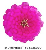 pink zinnia flower isolated on... | Shutterstock . vector #535236010