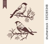 bullfinch set. hand drawn... | Shutterstock .eps vector #535285348