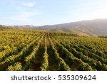 amongst the vineyards in the... | Shutterstock . vector #535309624