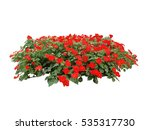 Red Flower Bush Tree Isolated...