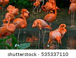 Pink Flamingos In Singapore Park