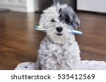 white poodle dog with a... | Shutterstock . vector #535412569