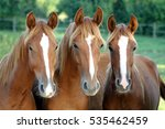 Stock photo  three of horses in front of you looking face to face against corral fence summertime rural scene 535462459