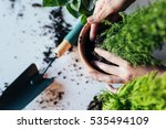 Woman's hands transplanting plant a into a new pot. - stock photo