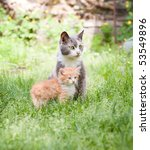 Stock photo two cats 53549896