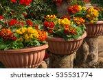 beautiful garden of colorful... | Shutterstock . vector #535531774