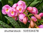 beautiful flowers of colorful... | Shutterstock . vector #535534378