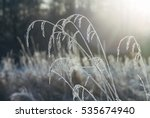 Frozen Grass Against Sunlight ...