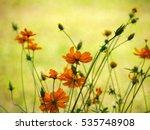 yellow cosmos in the garden ...   Shutterstock . vector #535748908