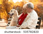 senior couple and big dog...   Shutterstock . vector #535782820
