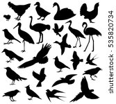 birds image different types of... | Shutterstock .eps vector #535820734